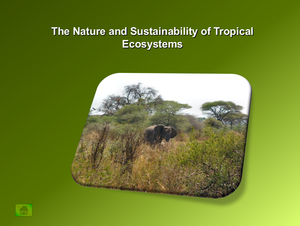 The Nature And Sustainability Of Tropical Ecosystems