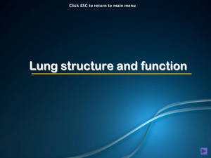 Al Bio Lung Structure And Function