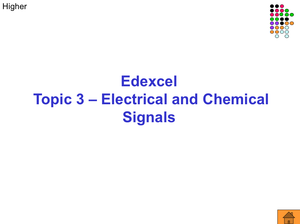 Gcse Biology Electrical Signals Higher
