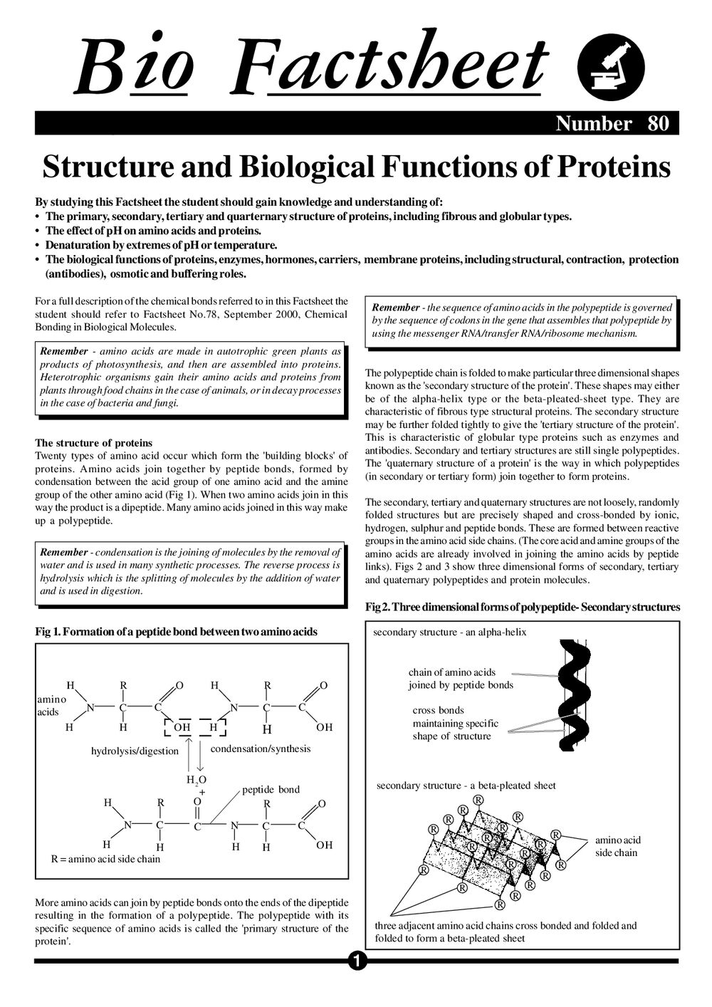 structure and biological functions of proteins