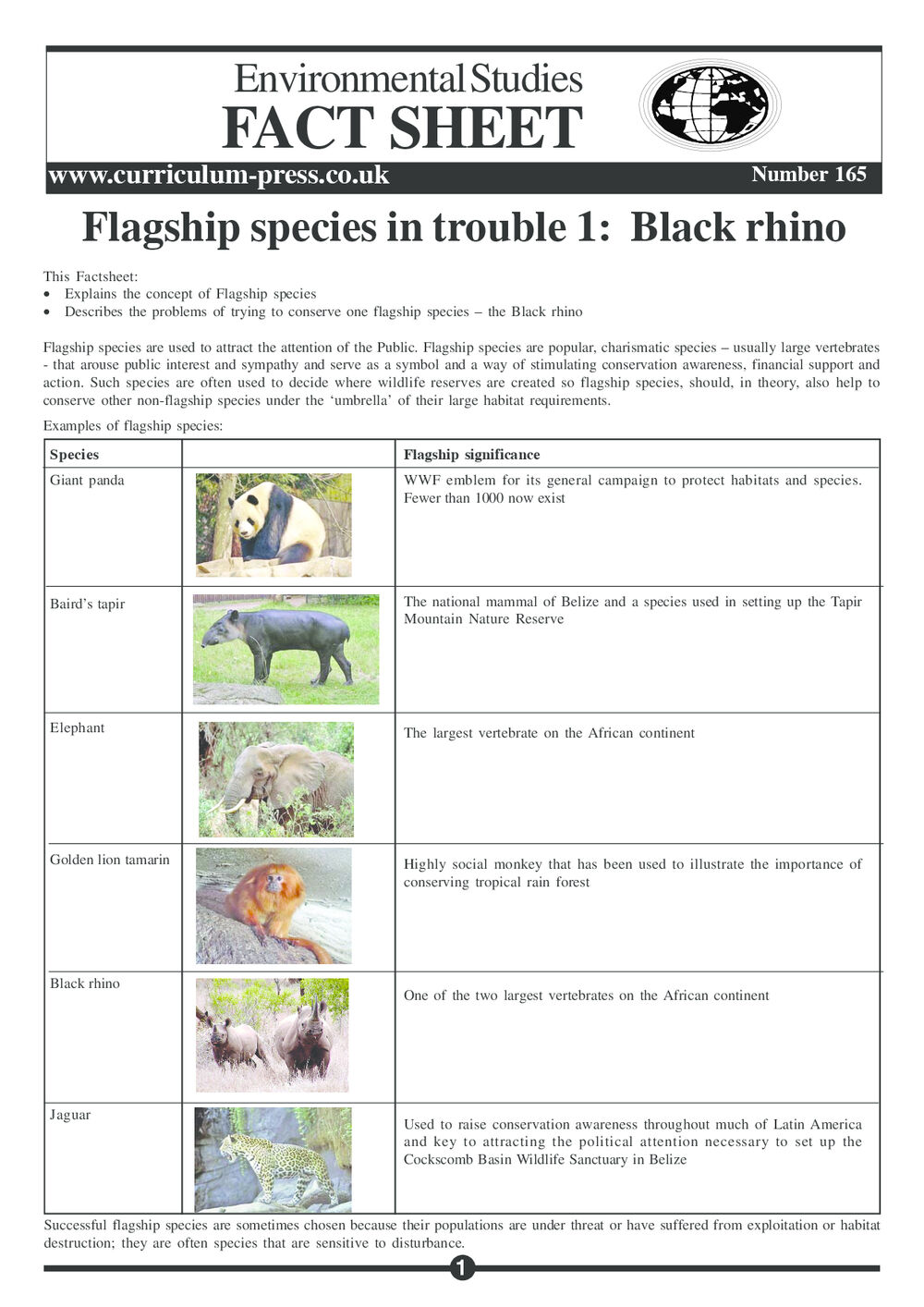 165 Flagship Species   Black Rhino