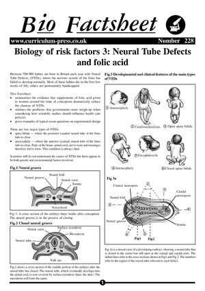 228 Risk Factors 3 Neural Tube Defects