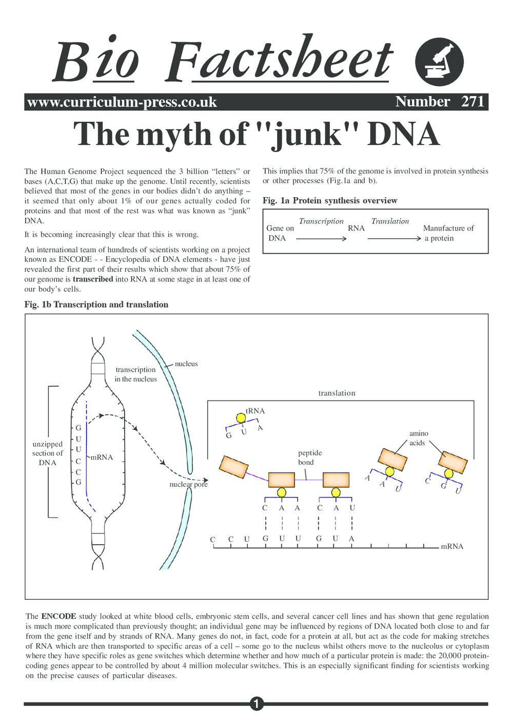 271 Myth Of Junk Dna Sample