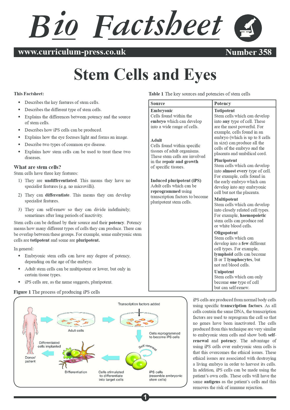 358 Stem Cells And Eyes