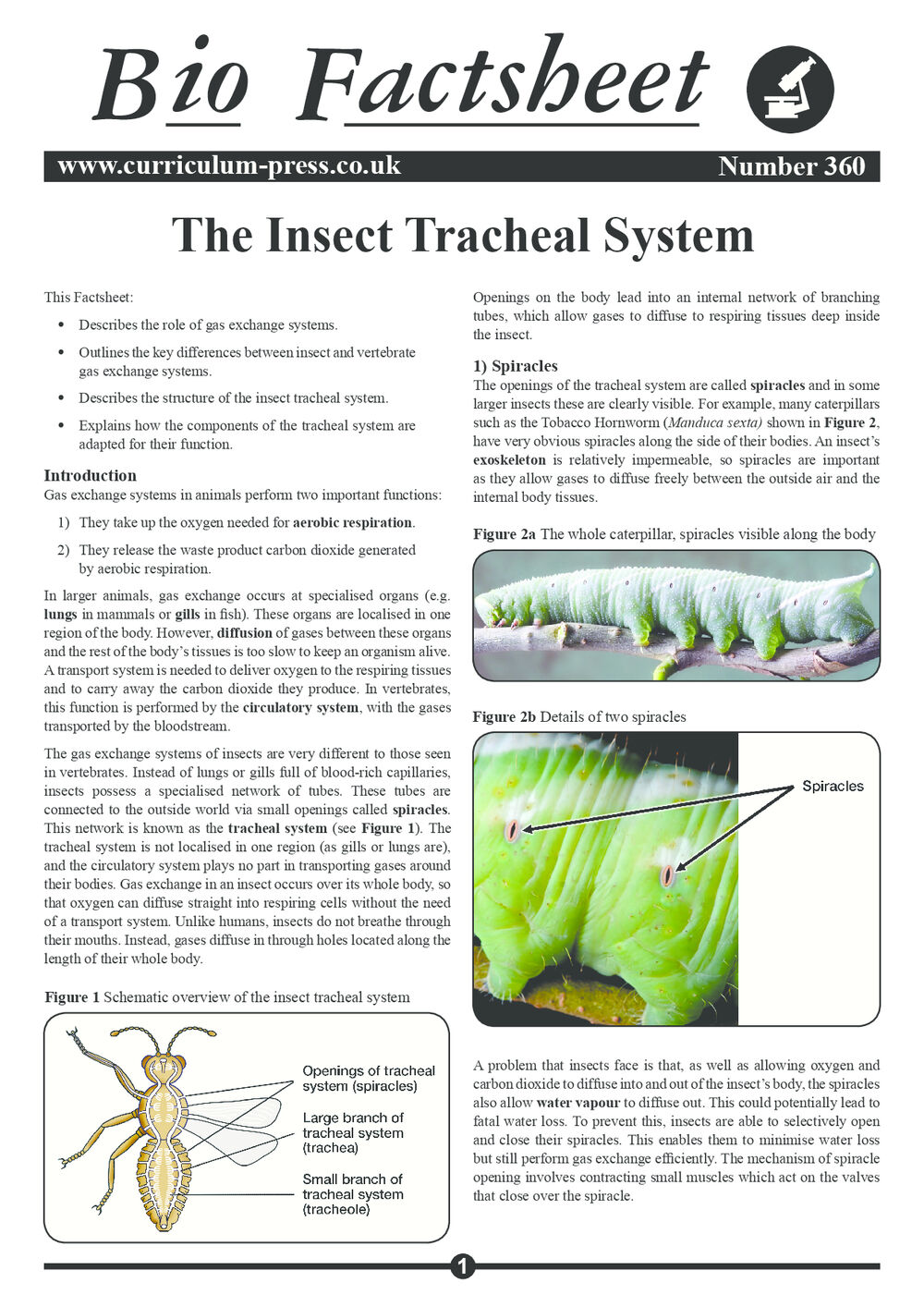 the insect tracheal system