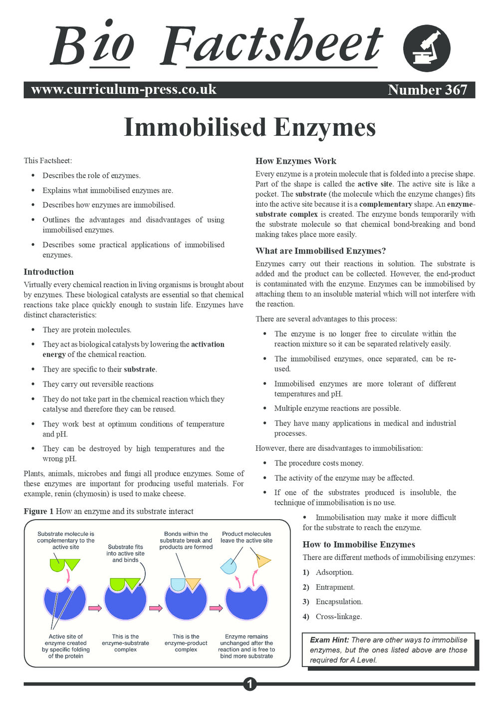 367 Immobilised Enzymes V2