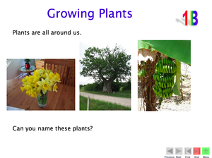 1B Growing Plants
